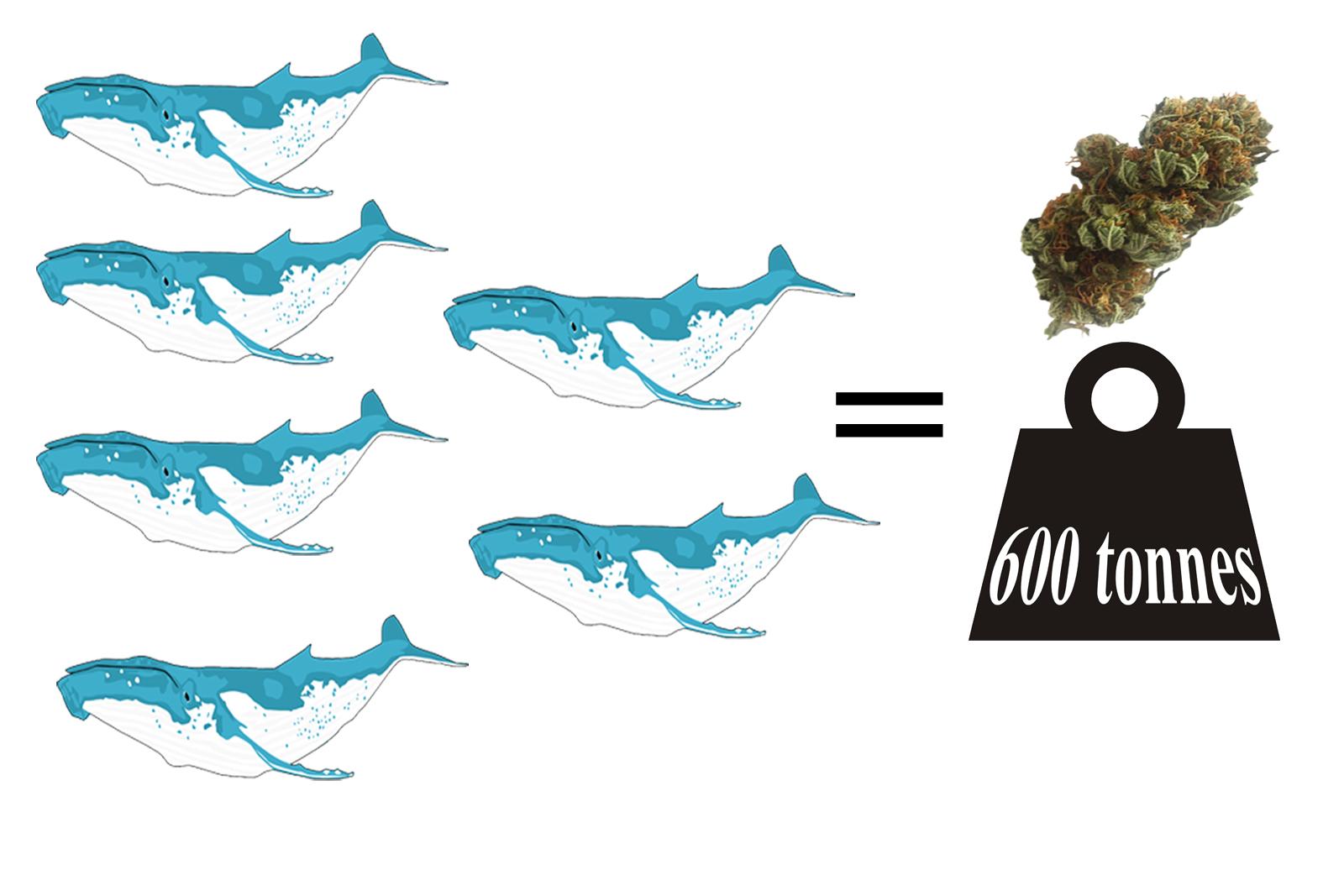 valeur baleine