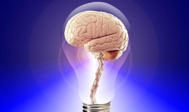 brain 20424 640