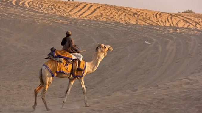 Camel ride sand dune