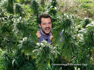 Cannabis Light Legale limitazione 05 ministero interni Salvini A