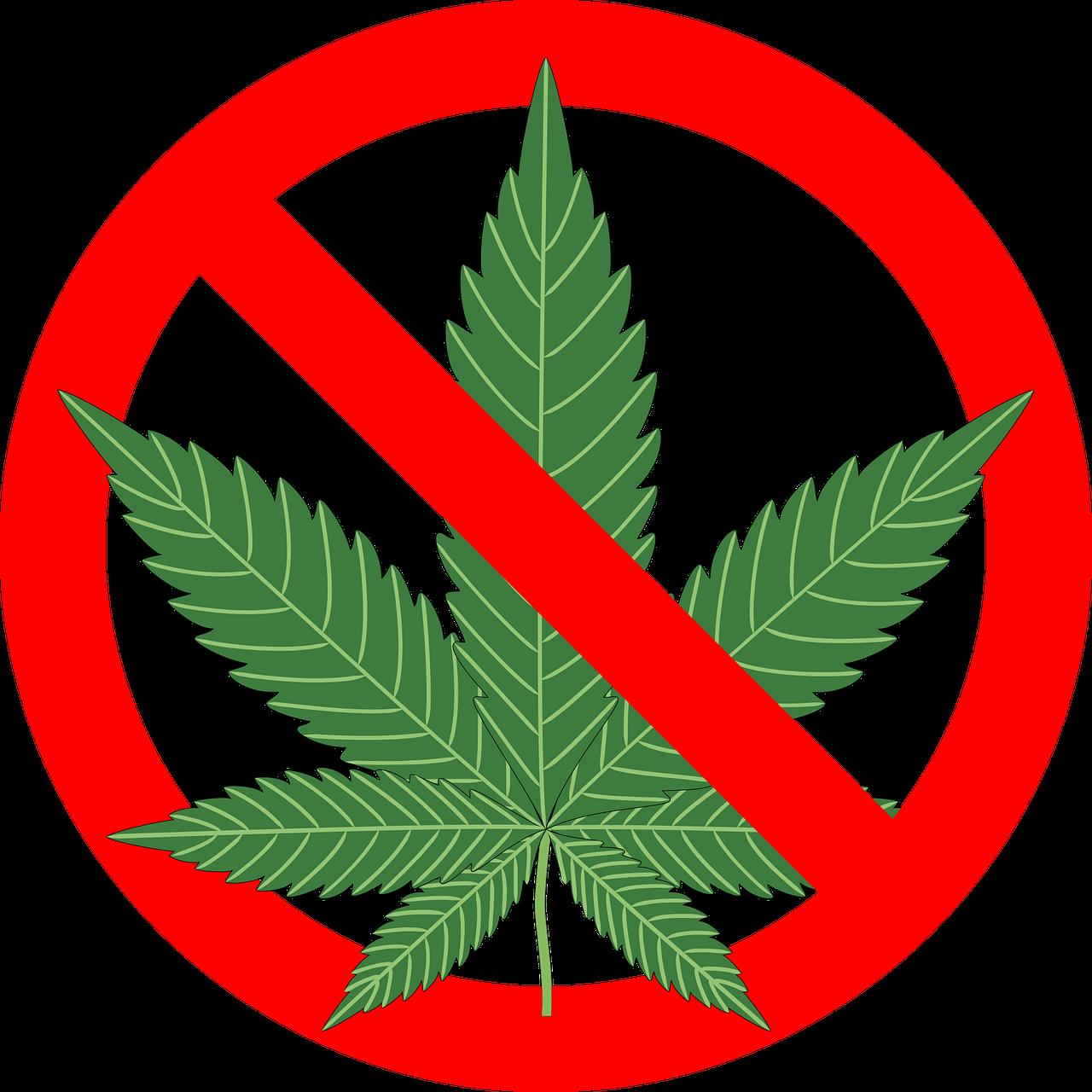 cannabis 1254745 1280 1