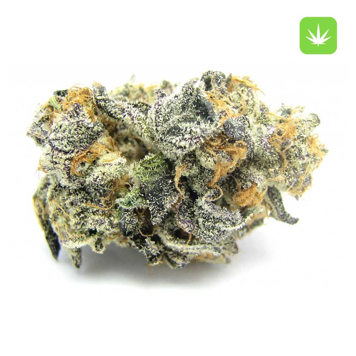 Blue Cookies Cannabis Avenue