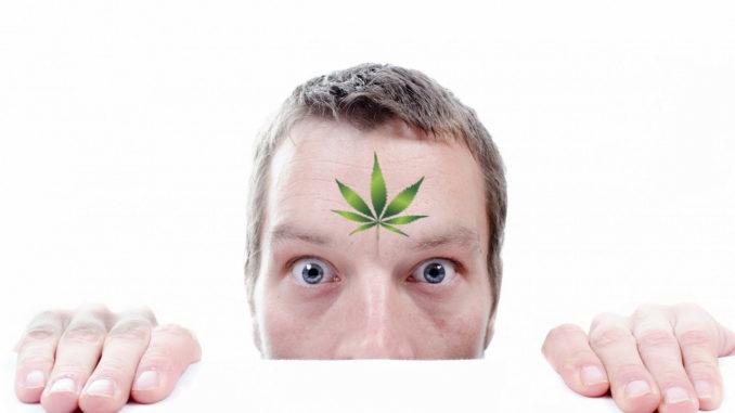 chanvre bien etre le cannabiste image @ pixabay