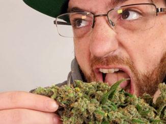 Le Cannabiste Crédits
