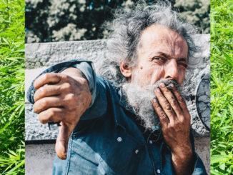 Le Cannabiste Cannabco