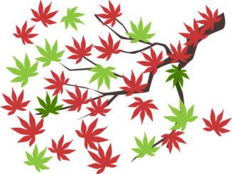 Le Cannabiste Canada Image Pixabay