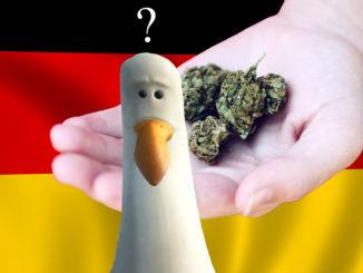 le cannabiste allemagne cannabis CDU