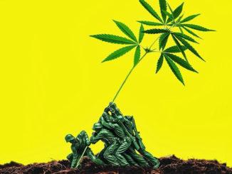 Le Cannabiste USA légalisation