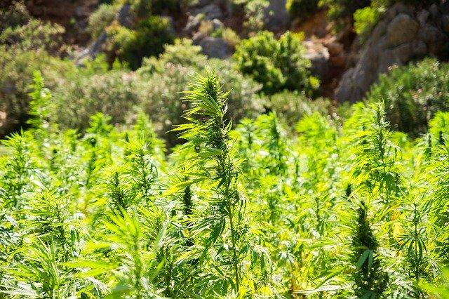 cannabis 2773112 640