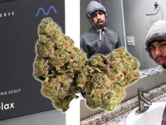 Le Cannabiste Record de THC