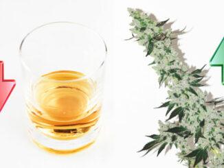 Vignette Le Cannabiste 1 678x381 1