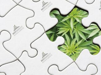 le Cannabiste Espagne Image Brotsanbert
