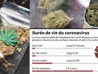le cannabiste covid19
