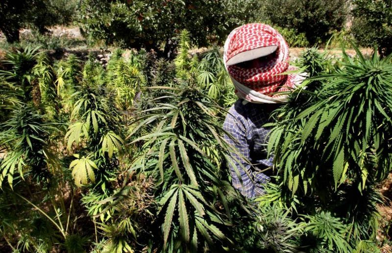 Liban Saisie Cannabis