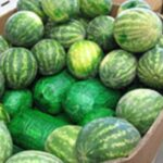 drug watermelons