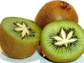 kiwi fruit cannabis leaf