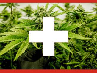 Le Cannabiste Suisse Conseil