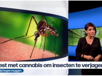 Le Cannabiste Moustiques