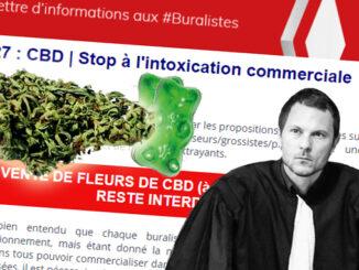 Le Cannabiste Cbd Plouton