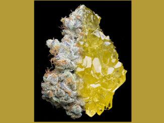 Le Cannabiste CBD melage Reims