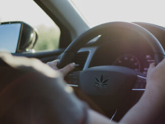 Le Cannabiste etude conduite CBD THC
