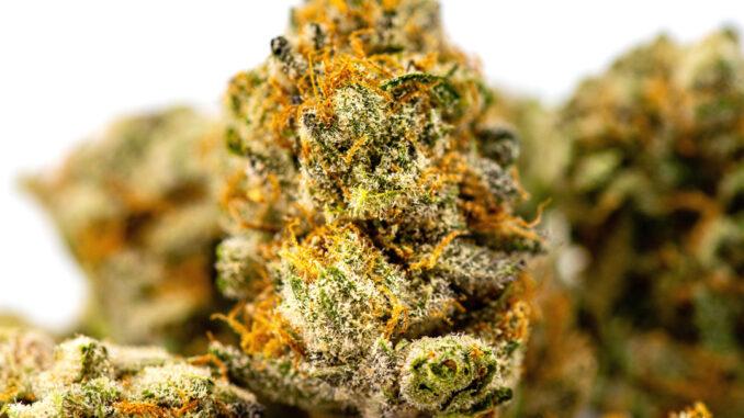 fleur-de-Cannabis-image-Avery-Meeker-Unsplash