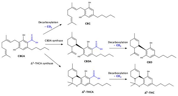 décarboxylation-du-cannabis-Source-Analytical-Cannabis