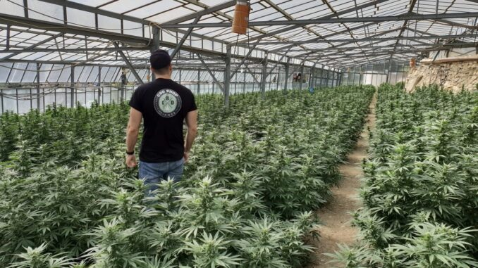 CBD-shop-france-pots-de-cannabis