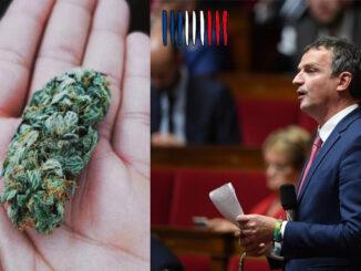 le cannabiste fmlambert