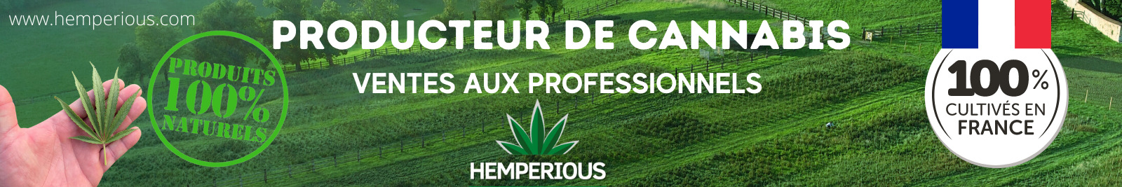 Hemperious-Lecannabiste