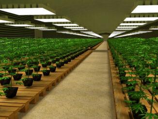 hemperious cannabis legal lyon