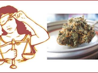 jugedread lecannabiste justice twittter1