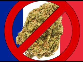 le cannabiste cbd fleurs interdite