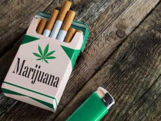 philip morris cannabis lecannabiste