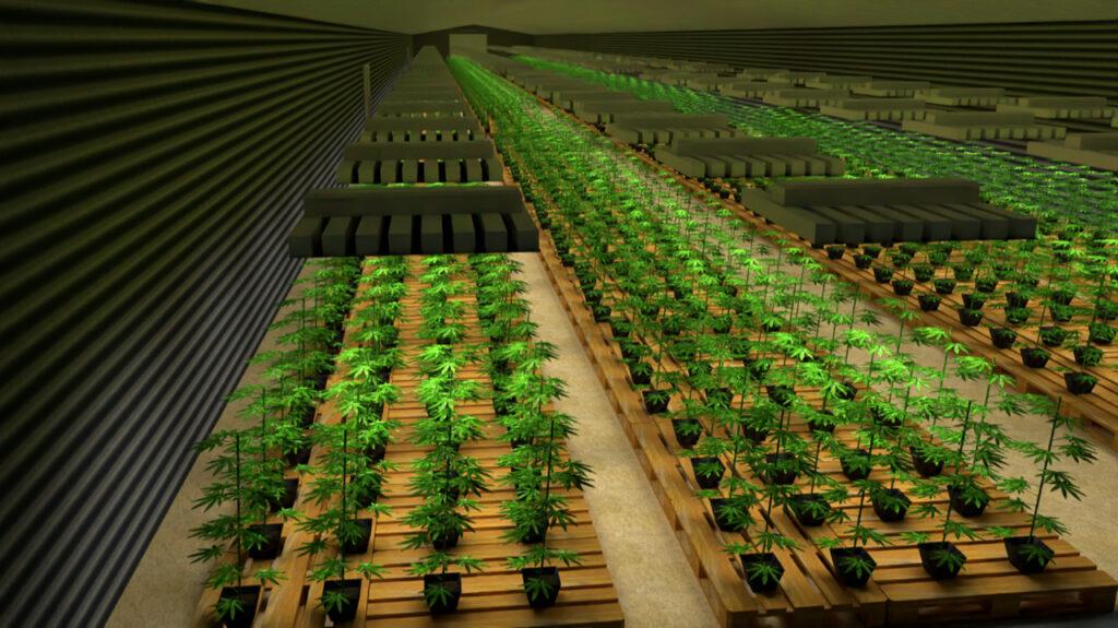 Cannabis Indoor aper_u 3d Hemperious