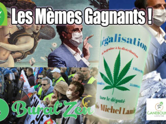 gagnants meme lambert verre assemblee cannabis