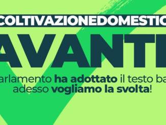 lecannabiste legalisation italie