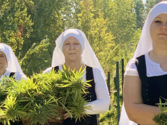 lecannabiste soeursdelavallee cannabis nonnes